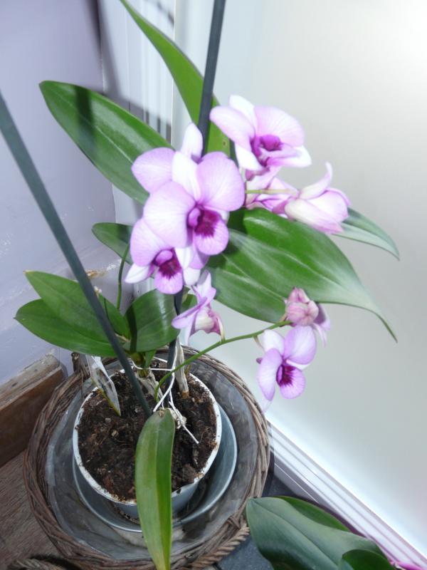 mes orchid e cuisine simple. Black Bedroom Furniture Sets. Home Design Ideas