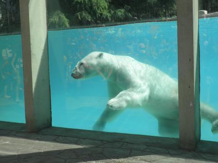 Zoo D 39 Amn Ville Entre Pr S Et Champs