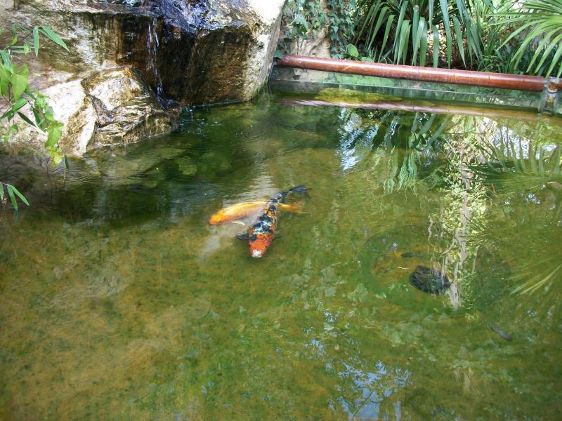 La fillomiere h l ne perin j 39 aime jouer avec les mots for Nettoyage bassin poisson rouge