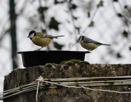 Oiseaux du ciel les neiges de la ca botine for Oiseaux du ciel