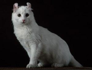 La fid lit d 39 un chat le monde selon ray zab - Chat qui dort sur son maitre ...