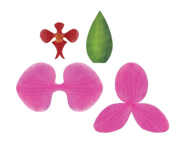 orchid e en papier a faire soi meme le monde selon ray zab. Black Bedroom Furniture Sets. Home Design Ideas