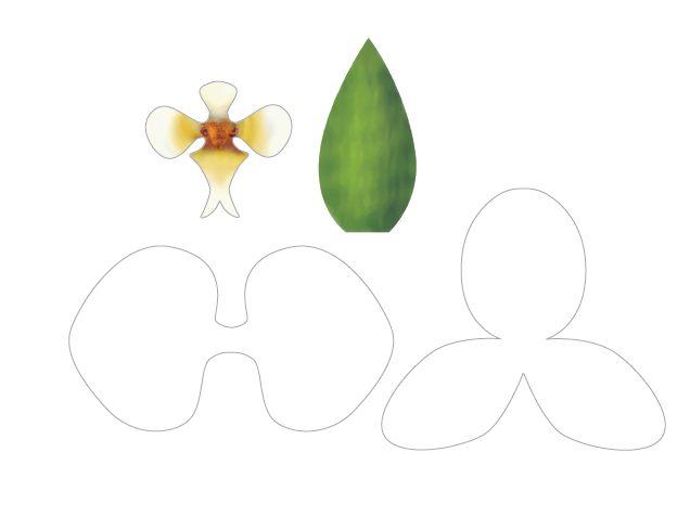 orchid e en papier a faire soi meme le monde selon ray zab