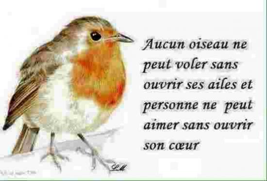 l'oiseau blog-33055-bonne-journee-060216082214-6177585565