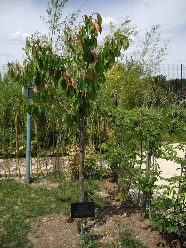 Laquenexy 57 des personalit s aux jardins fruitiers les - Jardins fruitiers de laquenexy ...