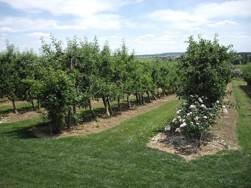 Laquenexy 57 les jardins fruitiers premi re partie les - Jardins fruitiers de laquenexy ...