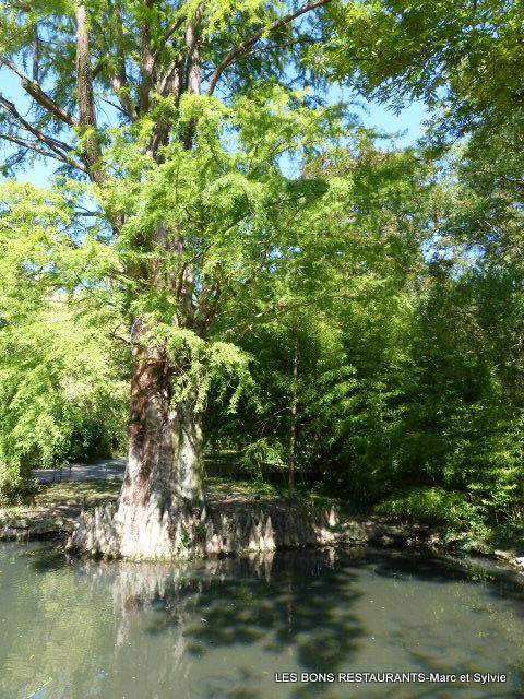 cest dire quil prend part une immense promenade continue comprenant le plan deau la place de la rpublique et lesplanade le parc municipal du - Jardin Botanique Metz