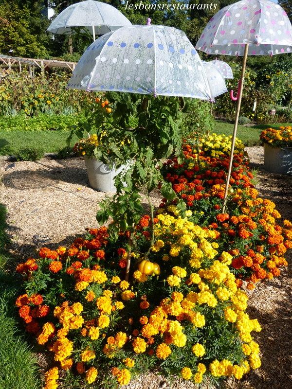 Wesserling 68 les parapluies du parc ii les bons for Jardin wesserling