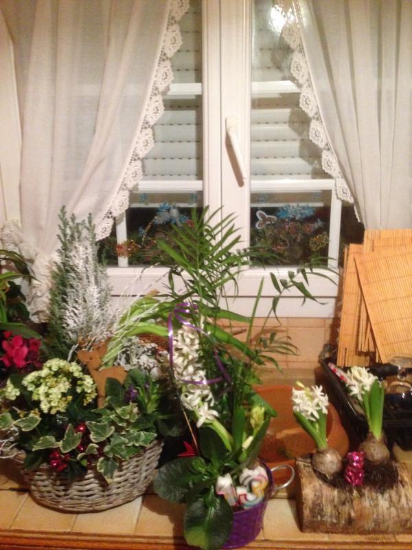 Les plantes en hiver courage la vie agreable for Arrosage plante hiver