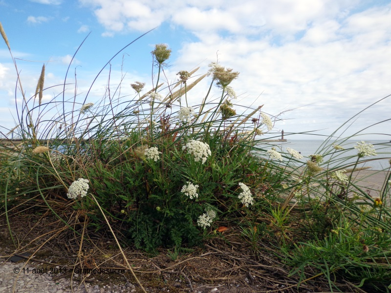 blog-36724-fleurs-de-dunes-110813154331-931874257