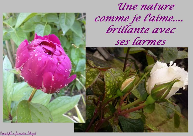 Bonjour La Pluie Parfum De Brimbelle