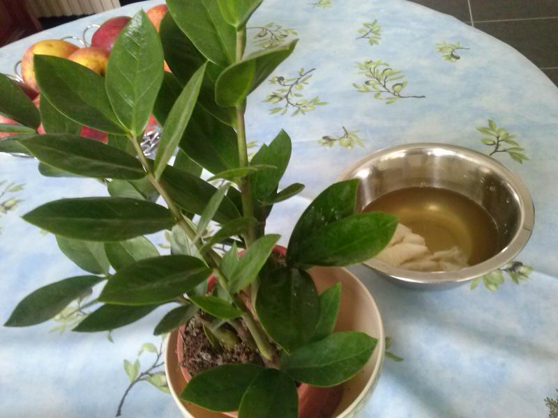 Sant des plantes parfum de brimbelle for Nettoyer feuilles plantes