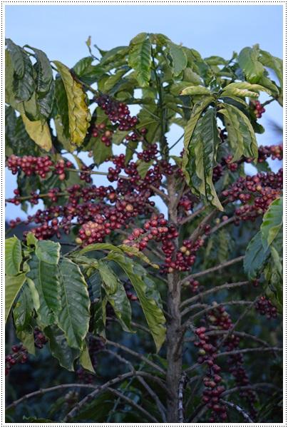 Vietnam jour 4 10 d cembre simple chez christine - Comment pousse les kiwi ...