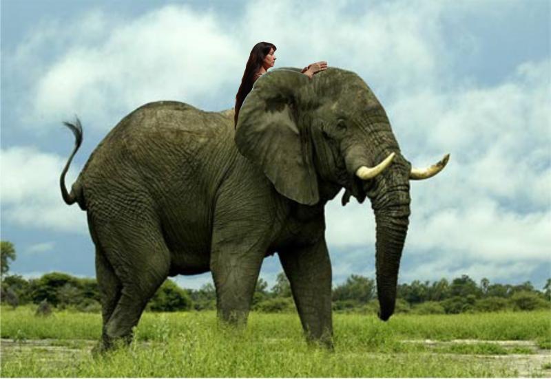 Пенис слона такой большой, что может использоваться в качестве пятой