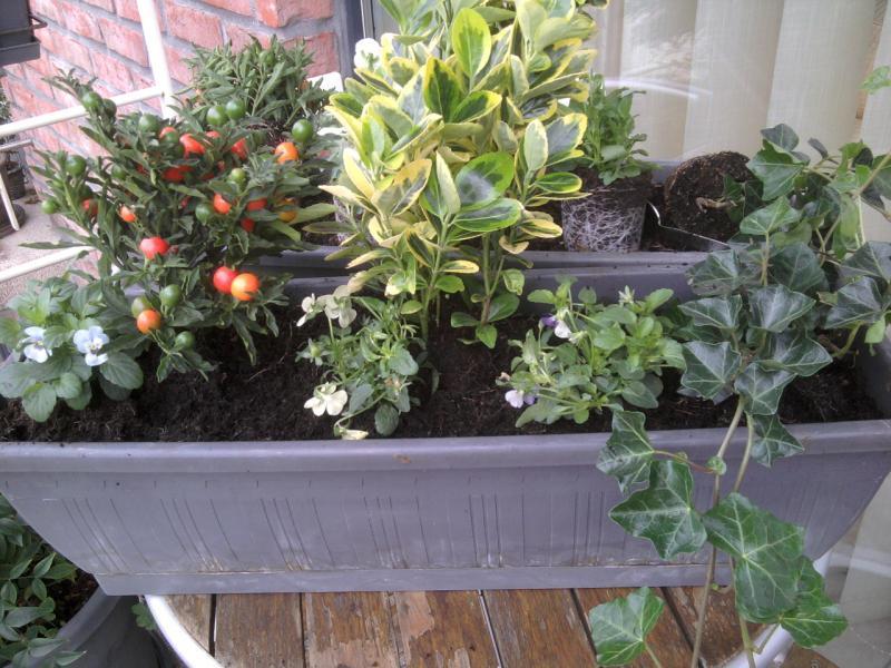Jardini res d 39 automne gigi for Jardiniere d automne