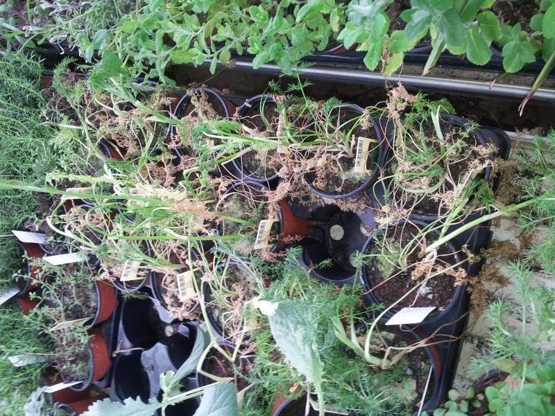 Visite a la jardinerie castorama chambray les tours mon - La petite madelaine chambray les tours ...