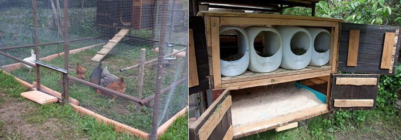 Des poules et de bons oeufs frais la maison la petite fille de madeleine - Maison pour les poules ...
