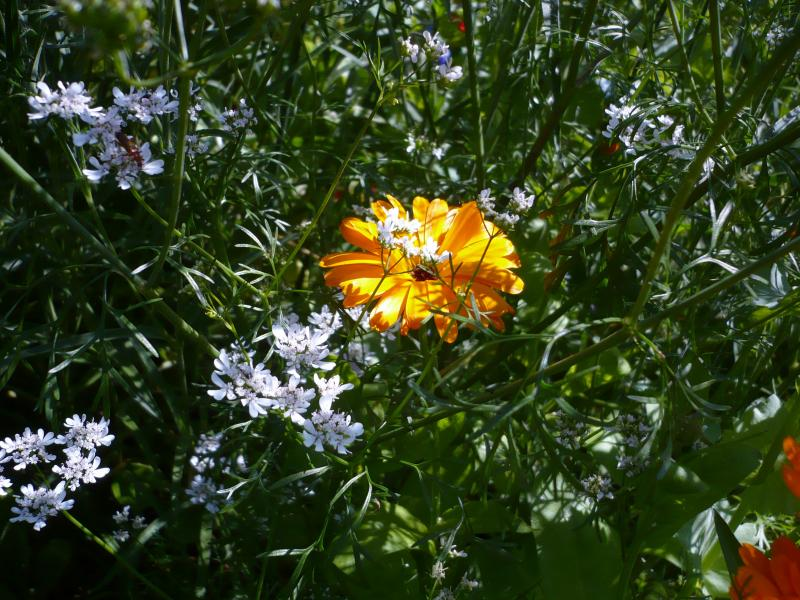 Les fleurs du jardin toujours sous le soleil le for Fleurs du jardin