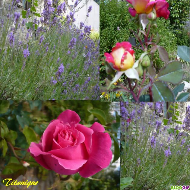Au jardin de juin le blog de titanique for Juin au jardin