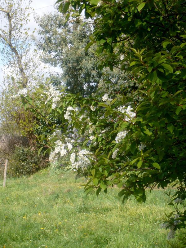 Au jardin quelques fleurs le blog de titanique for Fleurs au jardin