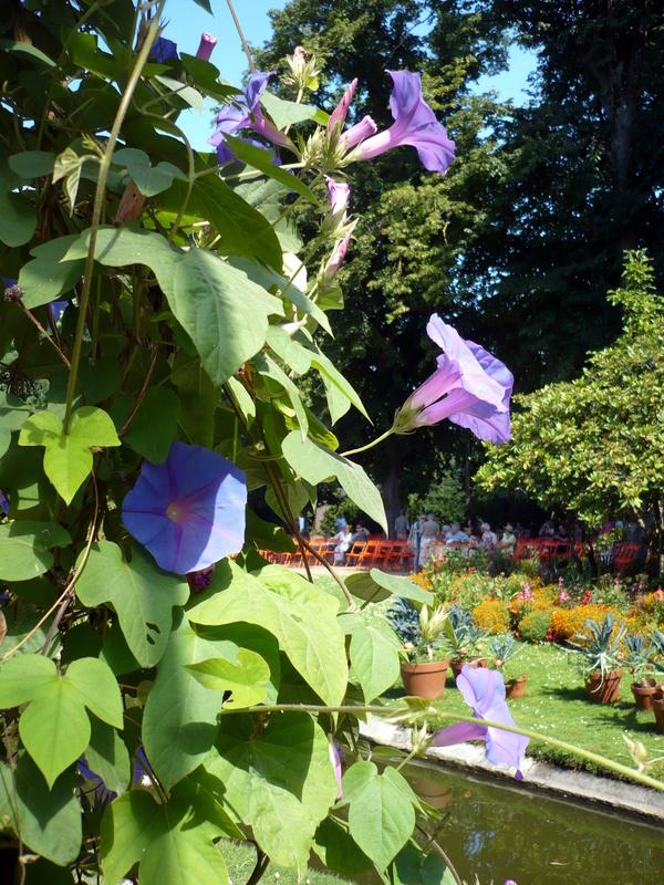 Balade au jardin des plantes de nantes le blog de titanique for Plante au jardin