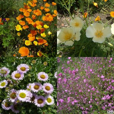 Brass e de fleurs au jardin le blog de titanique for Au jardin des fleurs