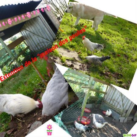 Extension de la maison des poules le blog de titanique - La maison de la poule ...