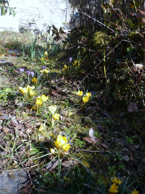 F vrier au jardin le blog de titanique - Que faire au jardin en fevrier ...