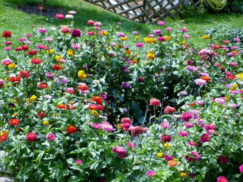 quand commencer le jardin awesome plants serrs les vgtaux peuvent tre de vritables mulchs. Black Bedroom Furniture Sets. Home Design Ideas