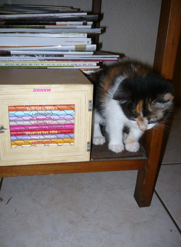 le chat malow est arriv chez nous le blog de titanique. Black Bedroom Furniture Sets. Home Design Ideas