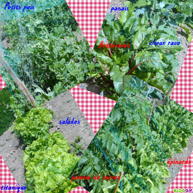 Le jardin potager le blog de titanique for Blog jardin potager