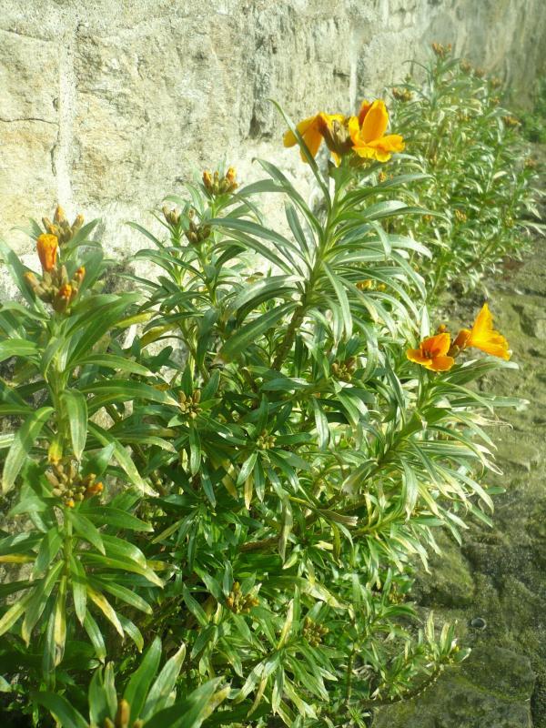 Les fleurs de f vrier au jardin le blog de titanique for Fleurs au jardin