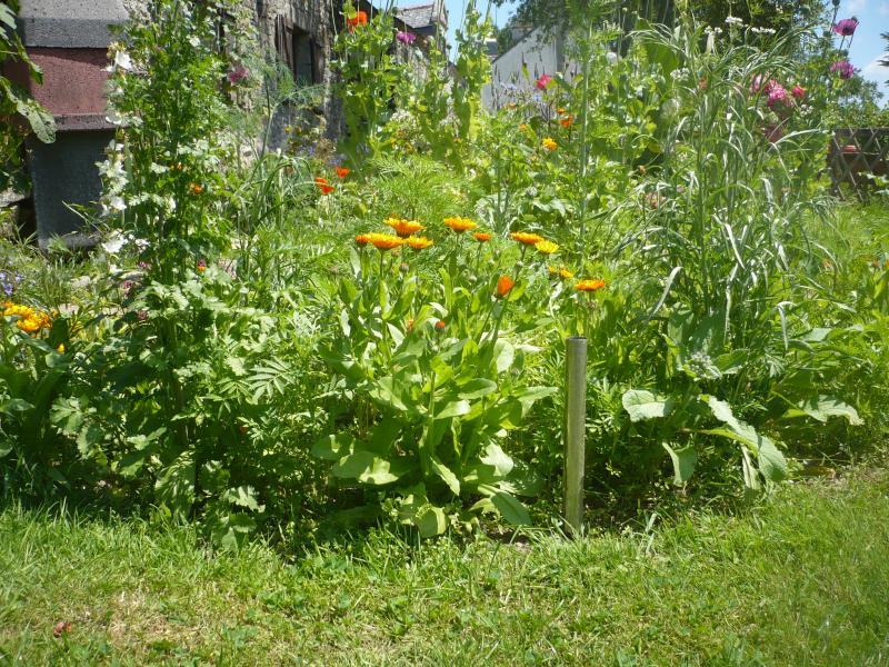 Les fleurs du jardin le blog de titanique for Fleurs du jardin