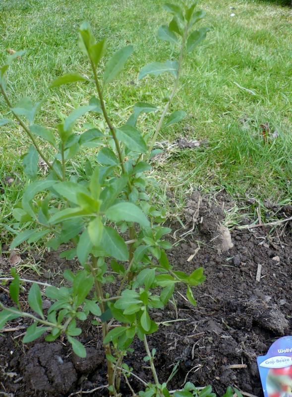 Filet protection arbre fruitier good excellent best filet arbre fruitier leroy merlin asnieres - Eloigner les oiseaux des arbres fruitiers ...