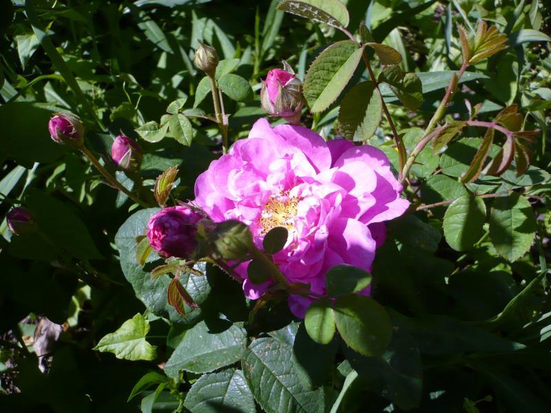 miroir dit moi qui est la plus belle rose du jardin le blog de titanique. Black Bedroom Furniture Sets. Home Design Ideas