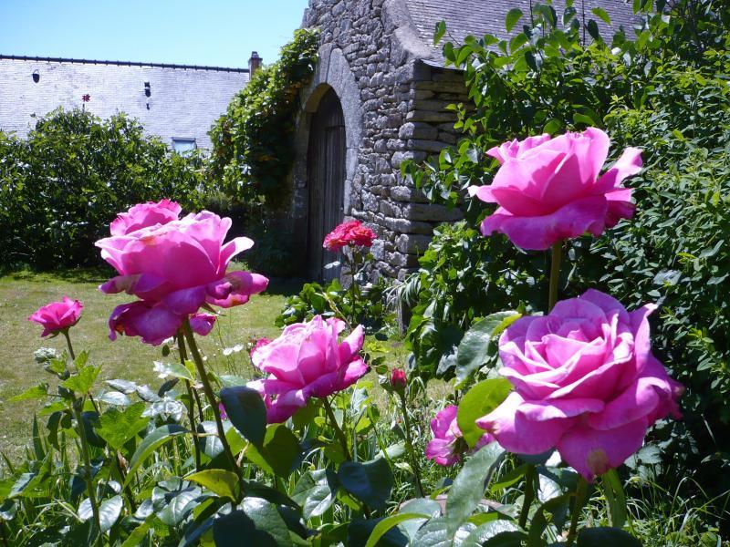 les plus belles roses anciennes roses anciennes lithographies de roses anciennes d 39 apr s le. Black Bedroom Furniture Sets. Home Design Ideas