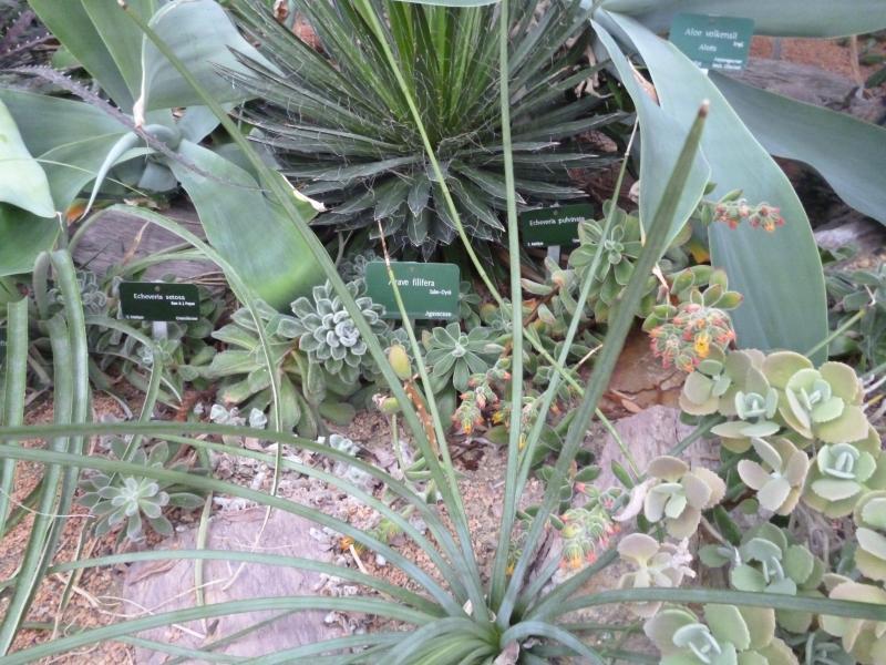 Promenade au jardin des plantes (suite 3) - Vendée \