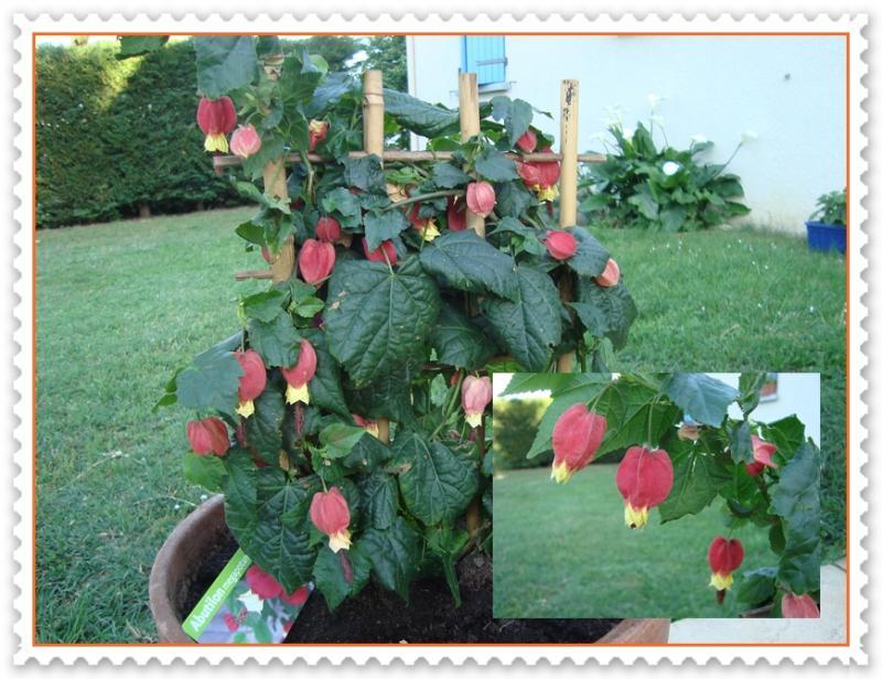 Ap ro dinatoire 7 mai 2011 la guillaumette for Plante japonaise pour jardin
