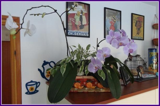 mes nouvelles orchid es 29 f vrier 2012 la guillaumette. Black Bedroom Furniture Sets. Home Design Ideas