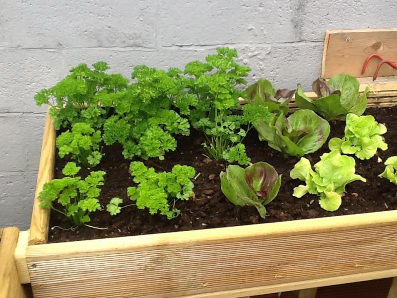 Mon jardin sur pieds cuisine simple - Jardin potager sur pied ...
