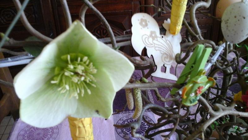 les fleurs du jardin mise cuisinette. Black Bedroom Furniture Sets. Home Design Ideas
