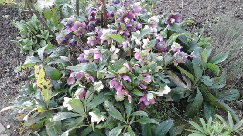 nouvelle plantation au jardin cuisinette