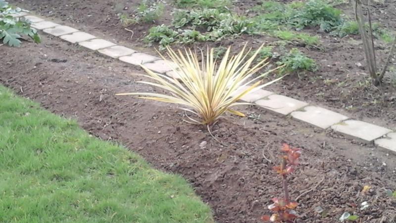 Nouvelle plantation au jardin cuisinette for Jardin plantation