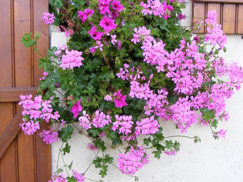 qq fleurs pour mes jardini res cuisinette. Black Bedroom Furniture Sets. Home Design Ideas