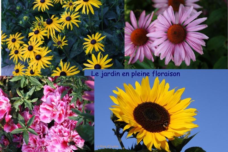 les fleurs du jardin le blog d 39 yvette c d. Black Bedroom Furniture Sets. Home Design Ideas
