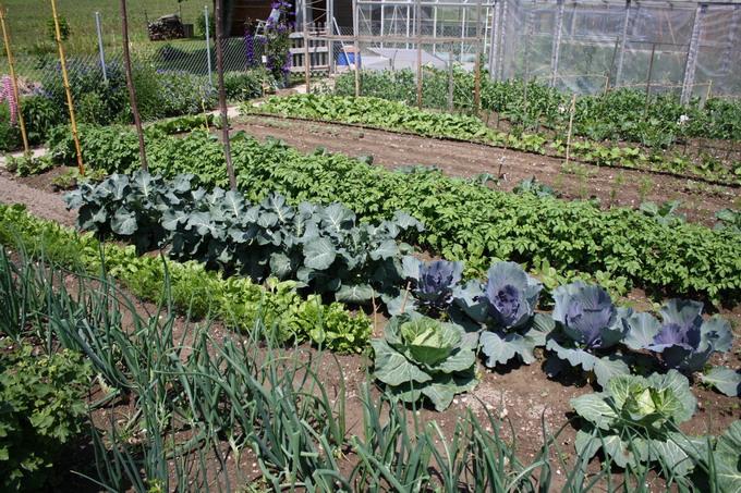 Vive le printemps le blog d 39 yvette c d for Vive le jardin ales