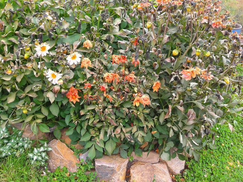 Dans mon jardin potager une communicative for Blog jardin potager