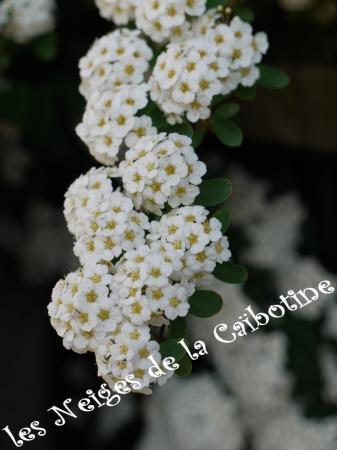 Les Neiges De La Caibotine Izabelle Chailland Priorite A La Planete