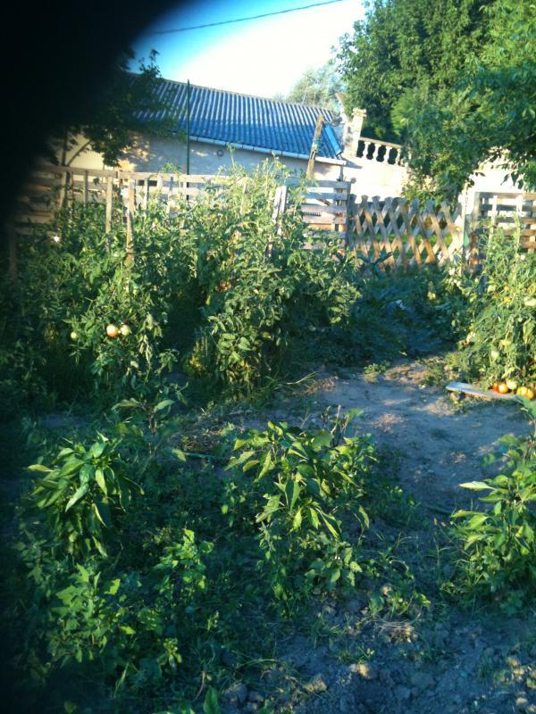 Un petit tour au jardin chez claudine - Petit jardin culinary arts tours ...