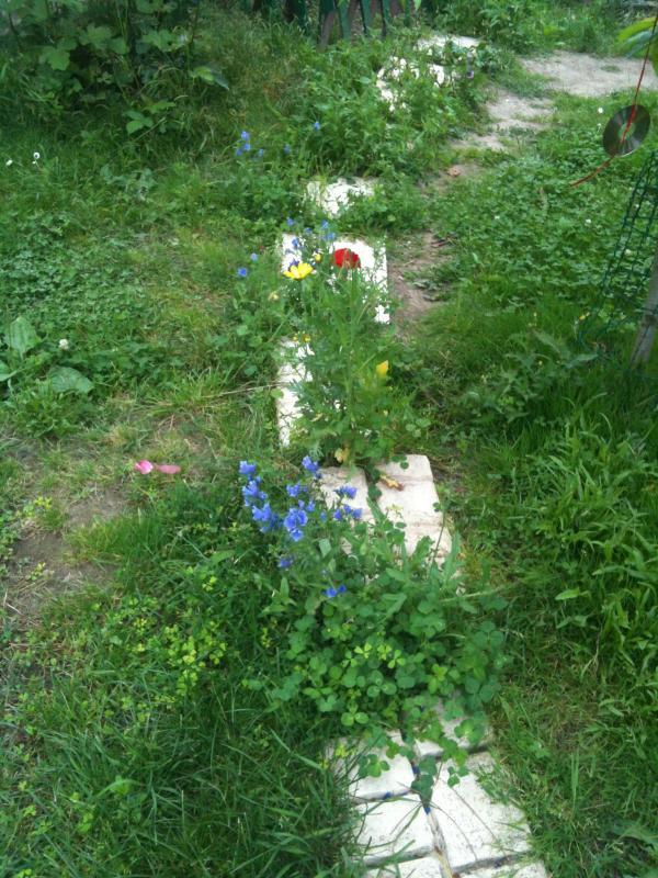 Un petit tour au jardin chez claudine - Petit jardin plan de la tour tours ...